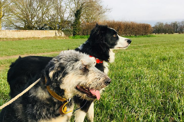 Win a dog-friendly glamping stay at West Stow Pods